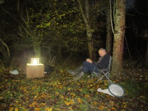 Linover Wood 7
