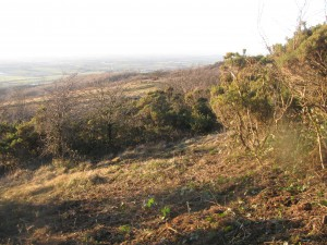 Cleared area at the Masts Reserve