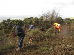 Cutting Gorse at the Masts Reserve