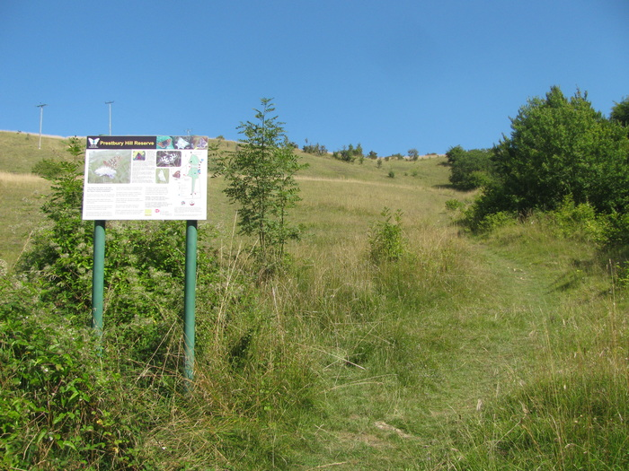 <p><b>The Masts reserve</b> Photo taken from the foot of the slope. Small Blue, Dingy Skipper, Chalkhill Blue, Dark Green Fritillary and many other butterflies can be seen here. <b>©</b> Tricia Atkinson