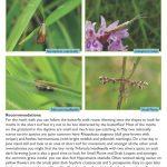 Butterfly Walk - Rough Bank Moths